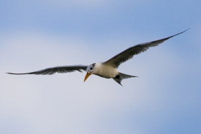 Your Tern looking!