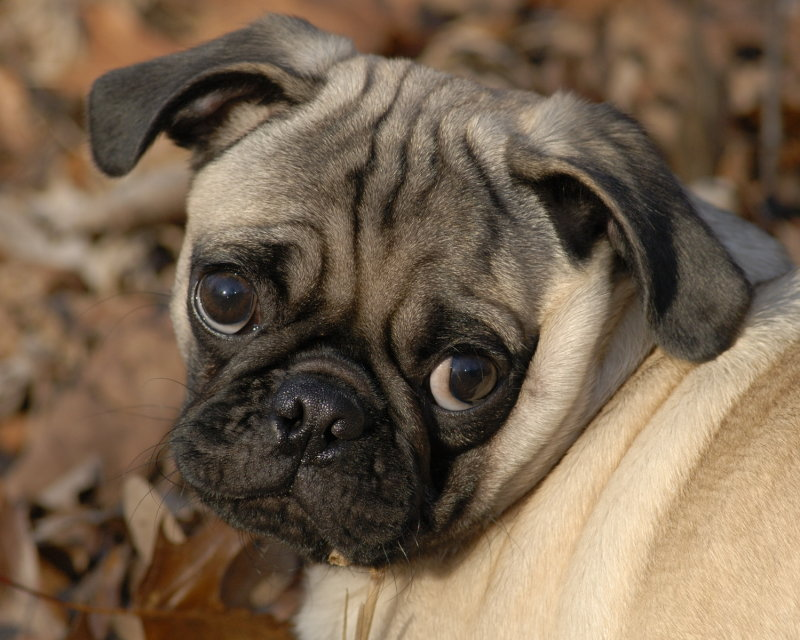 Sad Eyed Otto