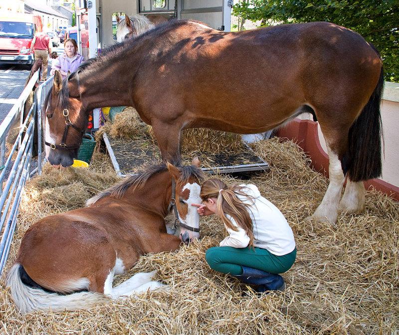 Mare, Foal & Minder