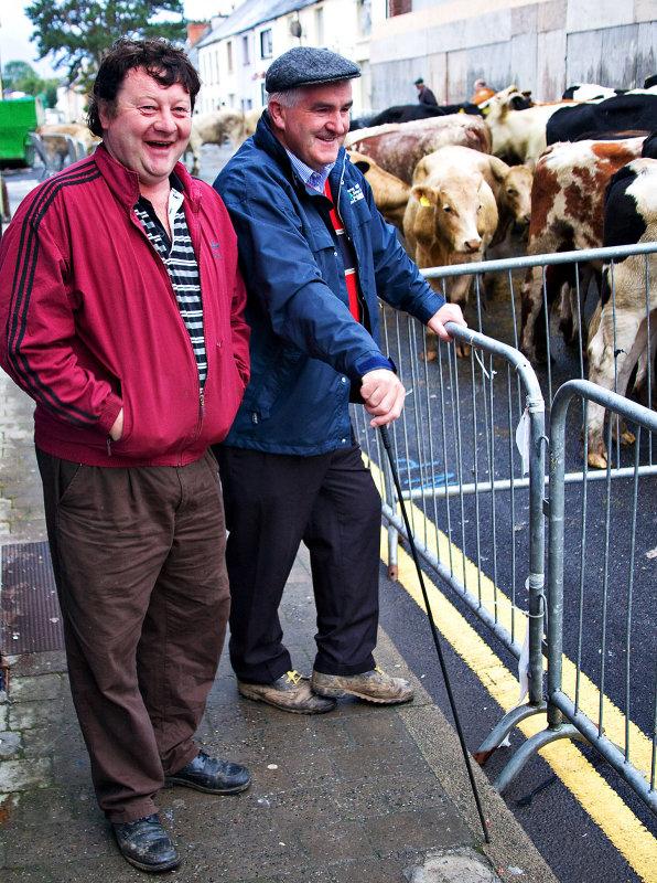Killorglin Cattle Fair