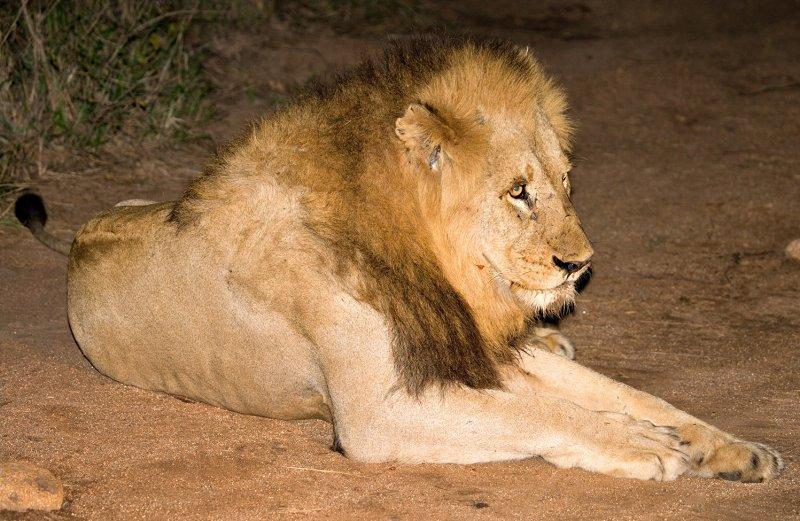 Mapogo Male 4