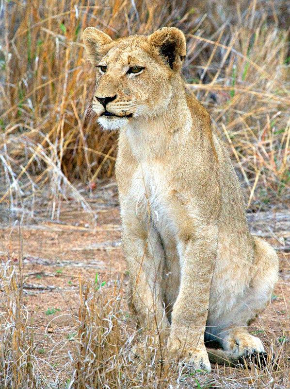 Watchful Female
