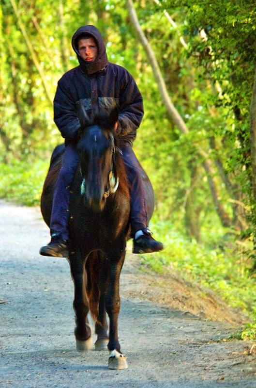 Hooded Horseman