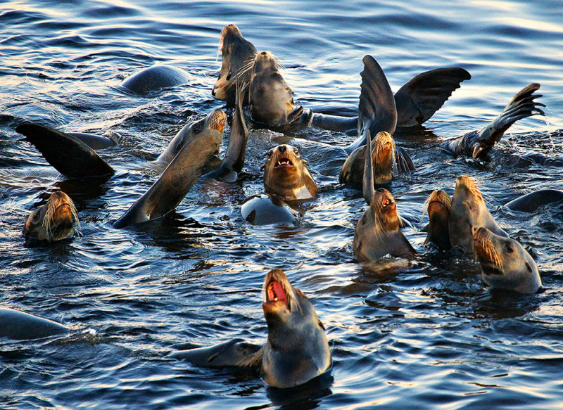 Sea-lion Party