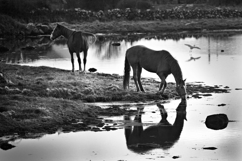 You can take a horse to water ...