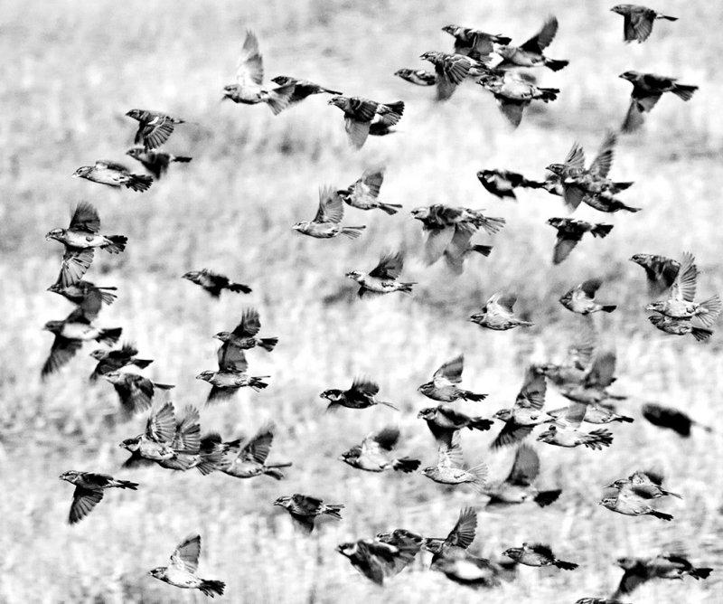 Harvest Flock