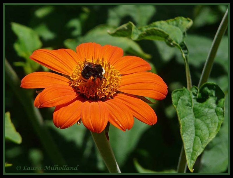 Orange with Bee