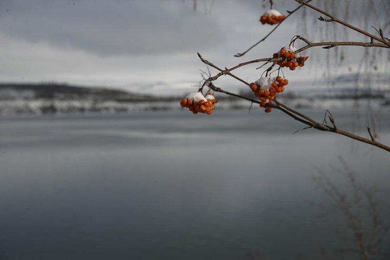 Berries on the river.jpg