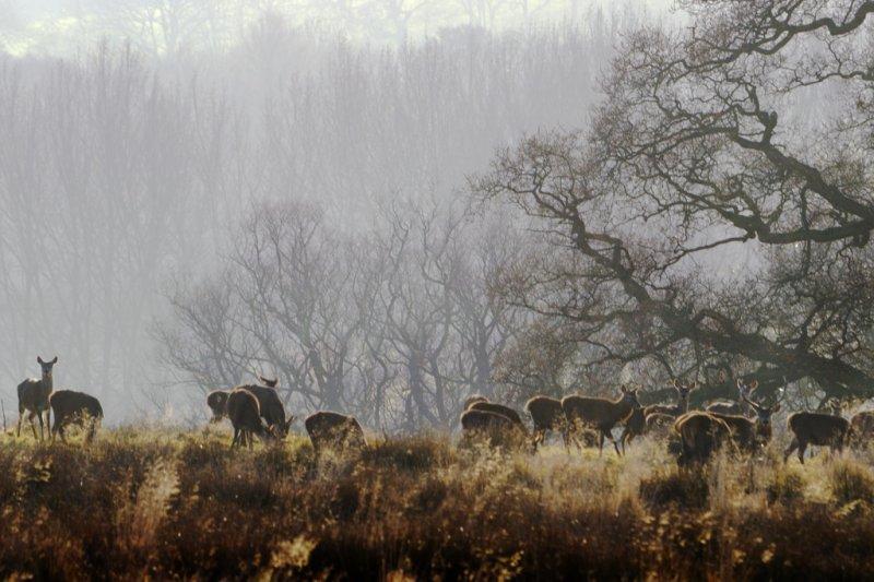 alert in Eastnor Deer park