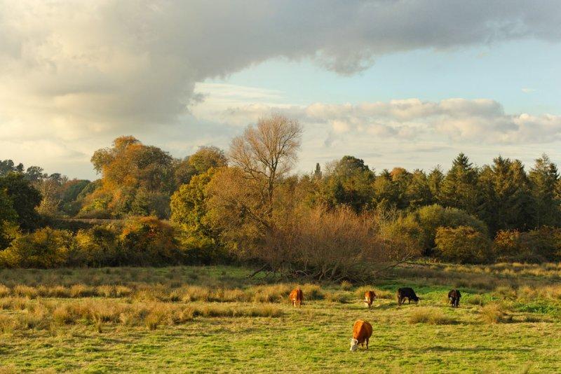 Woodbridge water meadows