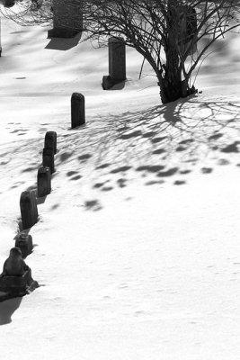 Row of Headstones, Bush and Shadow