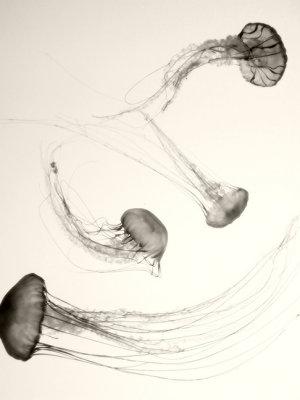 Jellyfish #2