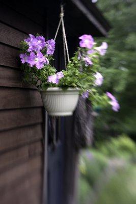 Hanging Planter #2