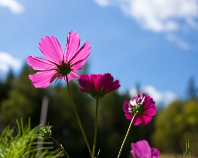 Cosmos and Sky #1
