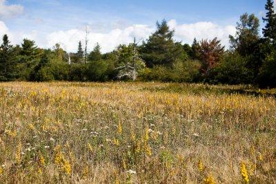 Entering the Preserve: Field