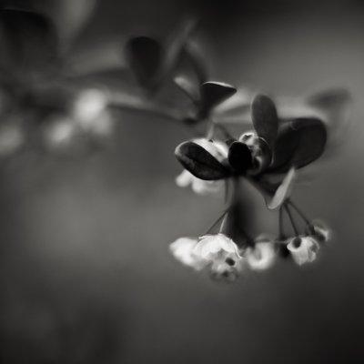 Small Flowers on Bush