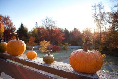 Morning Pumpkins