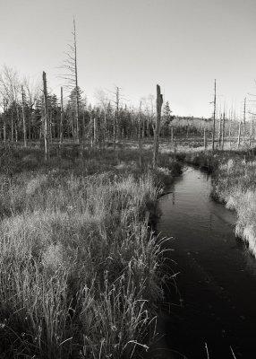 Wetland Scene