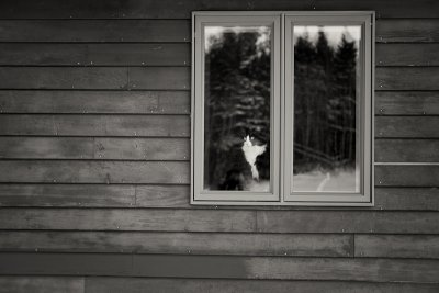 Waiting in the Window