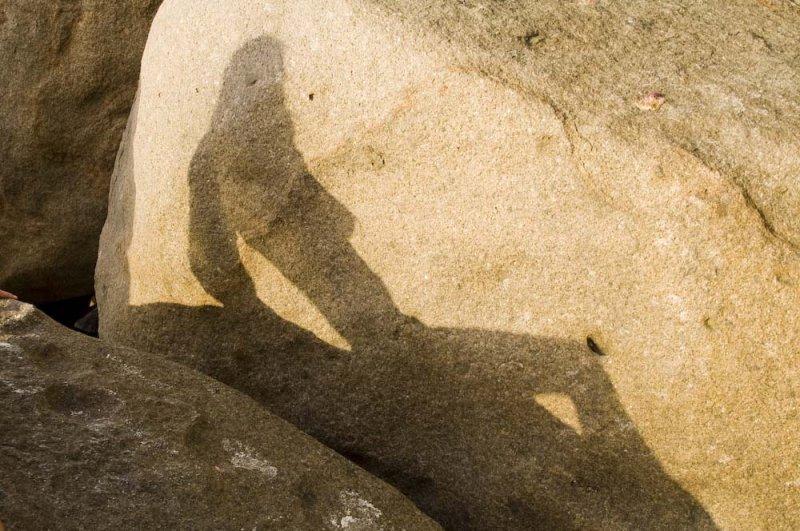 032-the shadow of the lizard.jpg