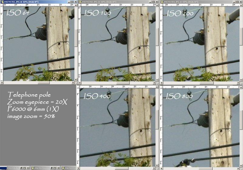 Tpole_6mm_050pctzoomb.jpg