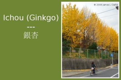 Ichou (Ginkgo)