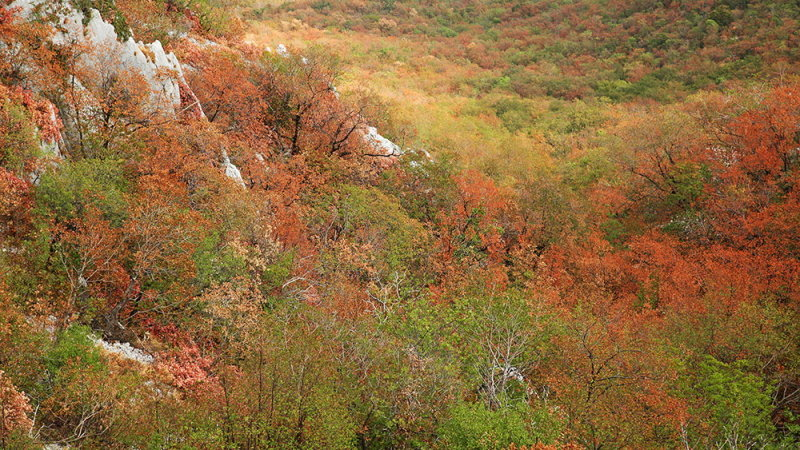 Autumn colours jesenske barve_MG_3873-111.jpg