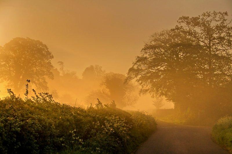 Country lane, near Whitelackington, Somerset