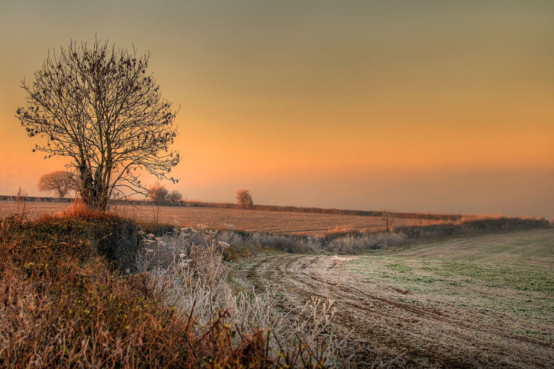 Frosty field, Witcombe, Somerset