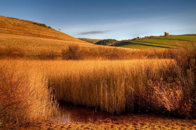 Reed bed, Abbotsbury, Dorset (3055)