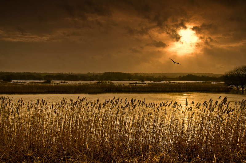 Sunset over the reed beds, Shapwick (2019)