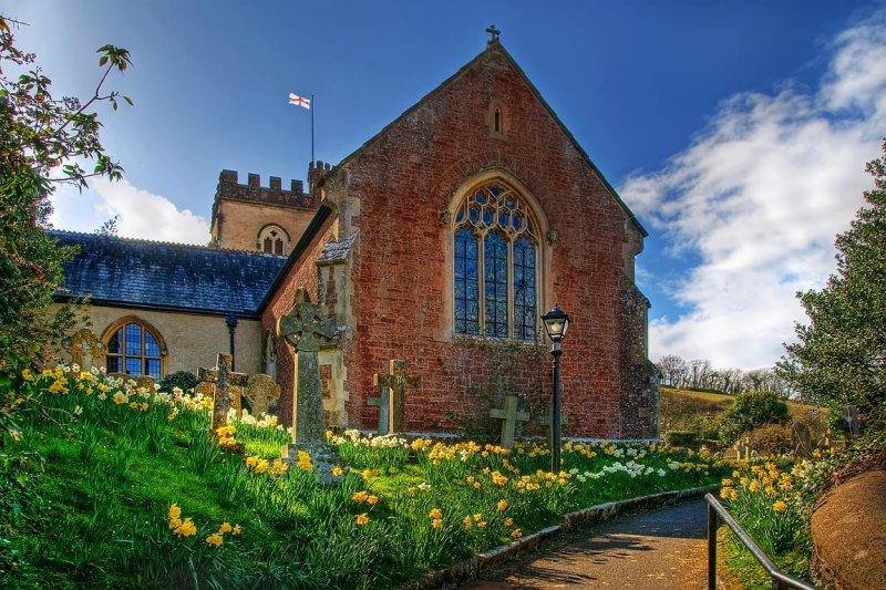 Daffodils, All Saints, Combeinteignhead, Devon