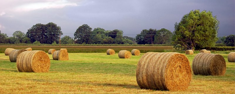 The first bales of summer (2820)