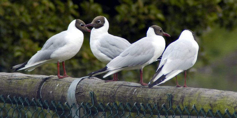 Tern the other way! (202