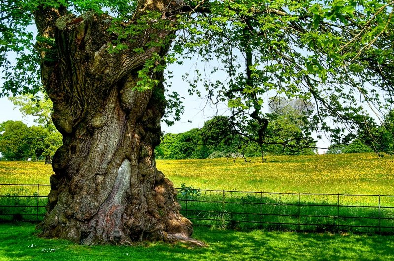 Old tree and oil seed