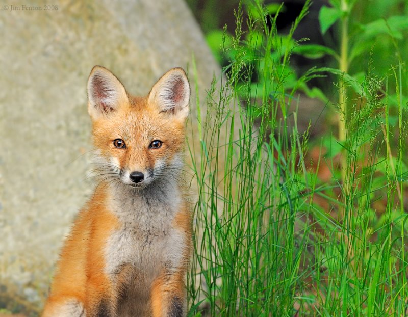_NW87041 Fox Kit Erect.jpg