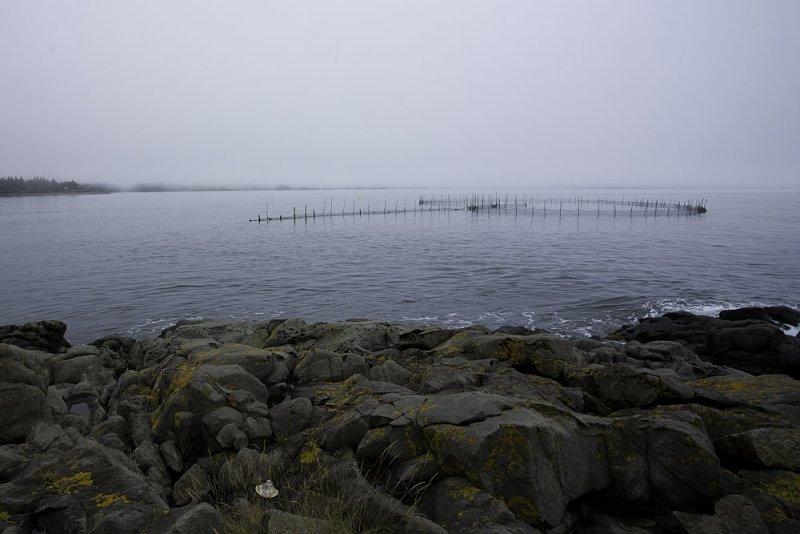 Foggy fish weir