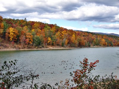 Shenandoah Valley: Geese and fall color
