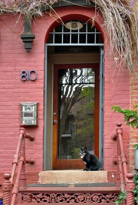 Black cat on salmon stairs