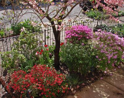 Our tiny garden this spring