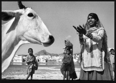 HoLy * CoW !!! A portrait of India from an UDderLY different perspective.