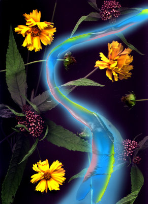 Scanned  Wild Flowers with their Ectoplasmic Energy FroZen in Time.