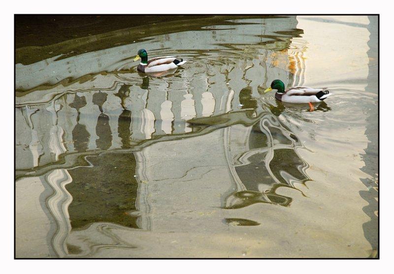 Ducks in a pond  (Hvor endene møtes ;-)