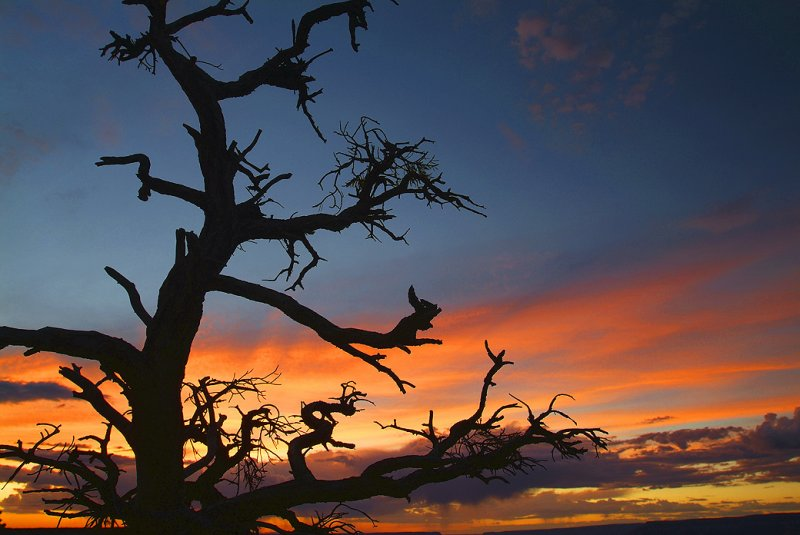 Grand Canyon Sunset Tree Silhouette