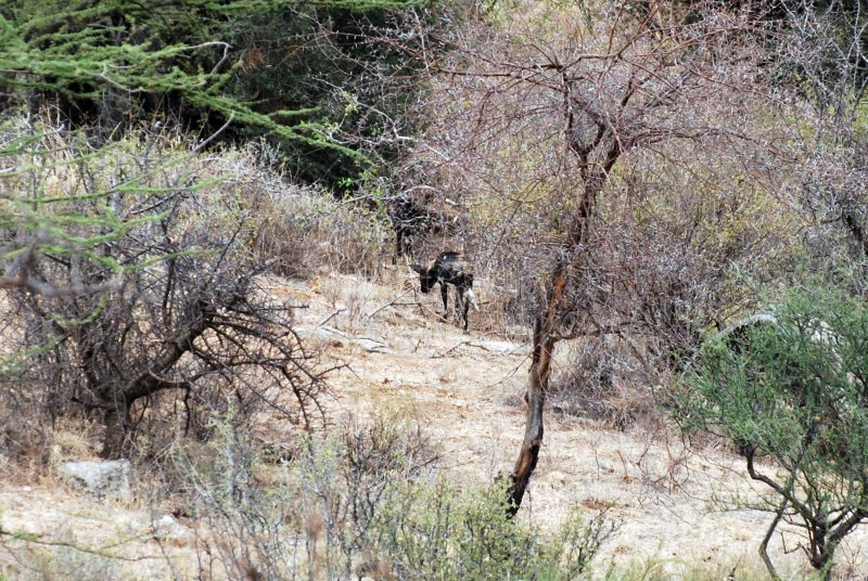 On our way out we came across 3 WILD DOGS!!!
