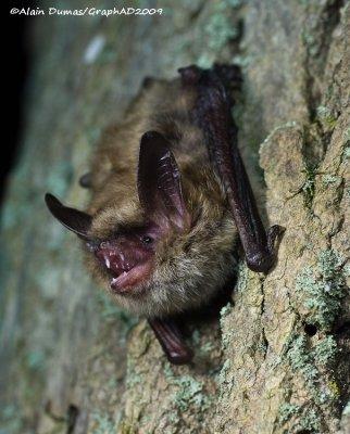 Bats Research - Recherche sur les Chauve-Souris