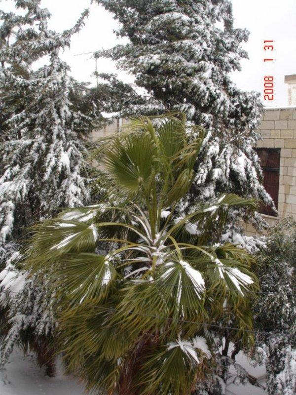 Snow in Amman 30.01.2008 074.jpg