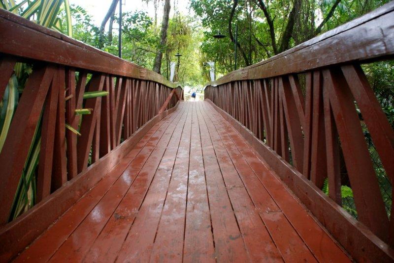 Bridge over the Swamp