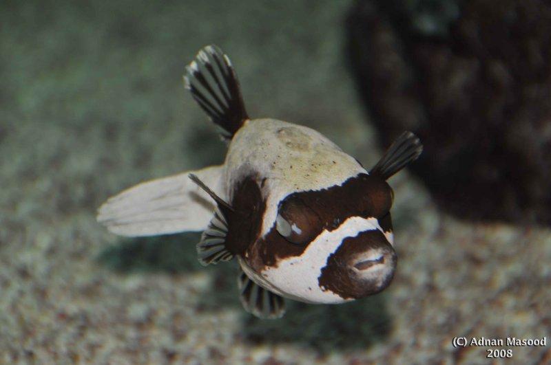 Fish_002.jpg