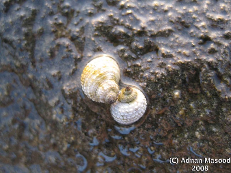 Sea_shells_001.jpg